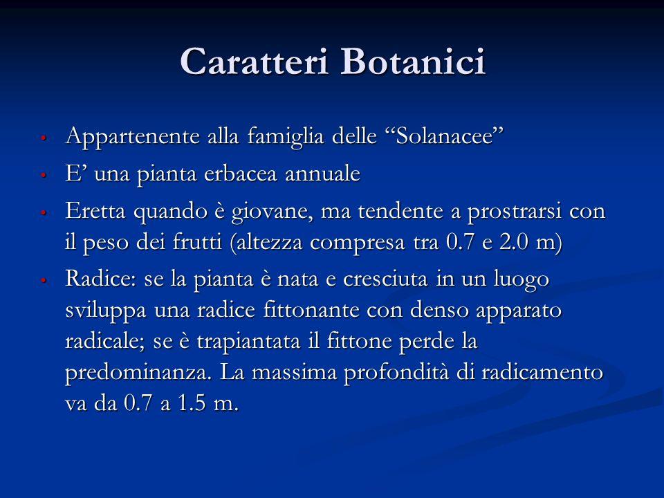 Caratteri Botanici Appartenente alla famiglia delle Solanacee