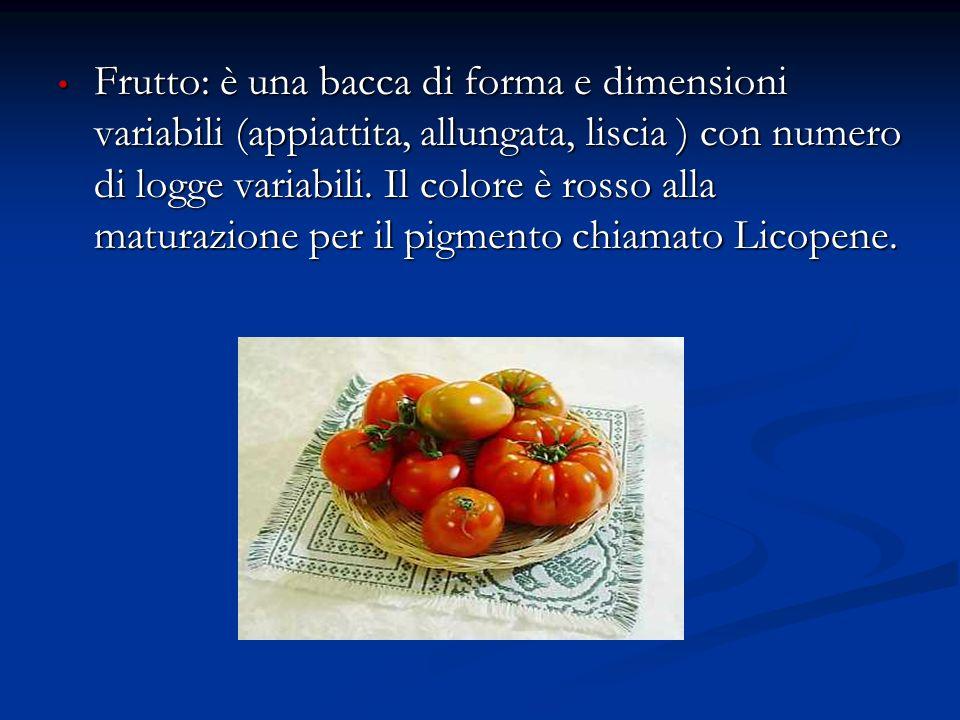Frutto: è una bacca di forma e dimensioni variabili (appiattita, allungata, liscia ) con numero di logge variabili.
