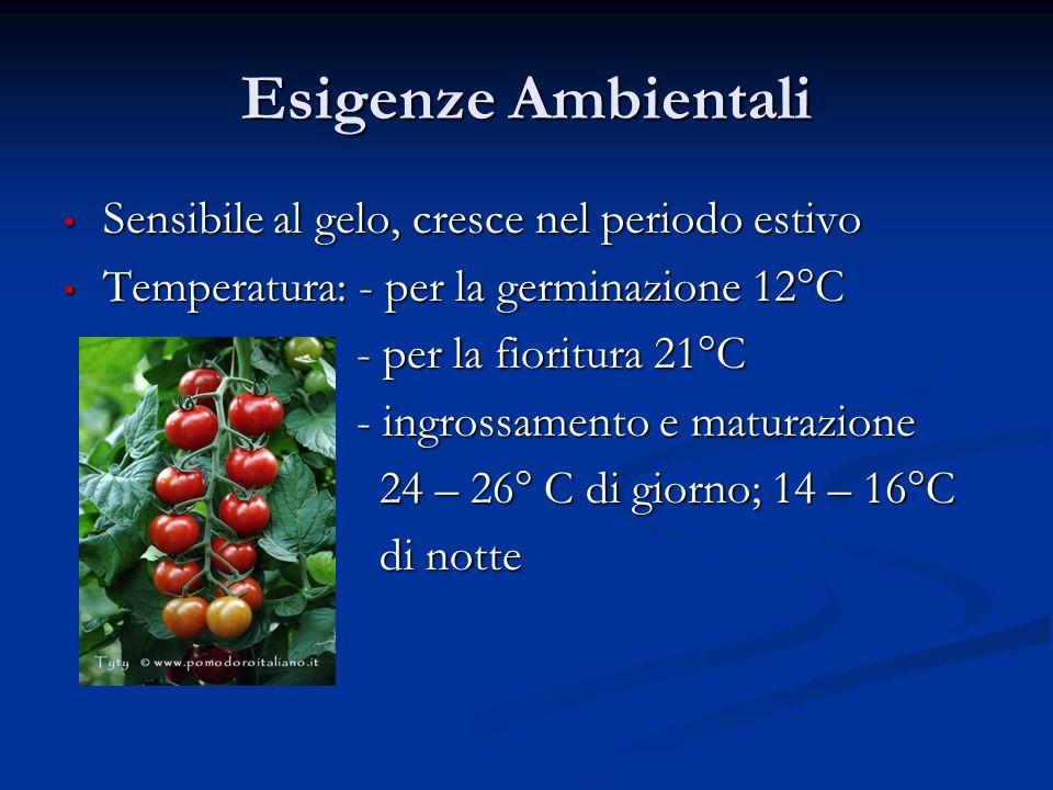 Esigenze Ambientali Sensibile al gelo, cresce nel periodo estivo
