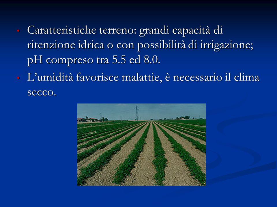 Caratteristiche terreno: grandi capacità di ritenzione idrica o con possibilità di irrigazione; pH compreso tra 5.5 ed 8.0.