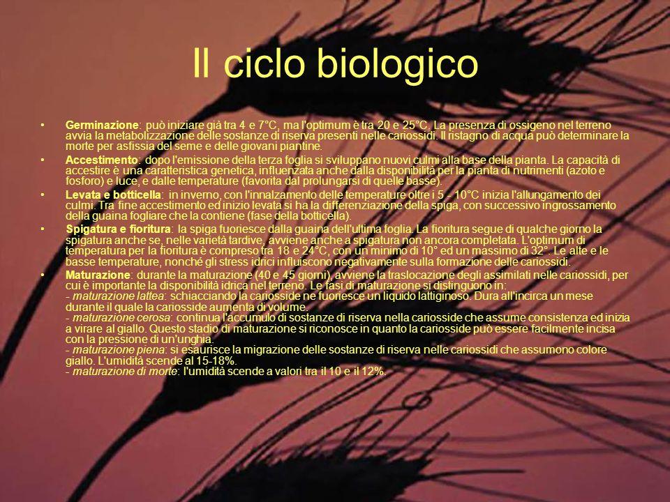 Il ciclo biologico