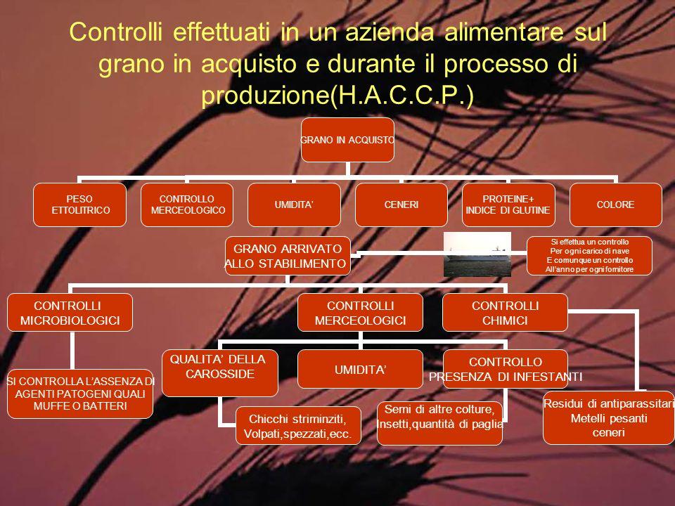 Controlli effettuati in un azienda alimentare sul grano in acquisto e durante il processo di produzione(H.A.C.C.P.)