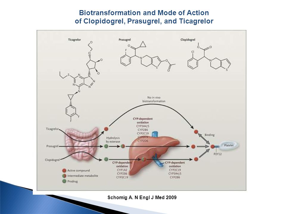 Biotransformation and Mode of Action