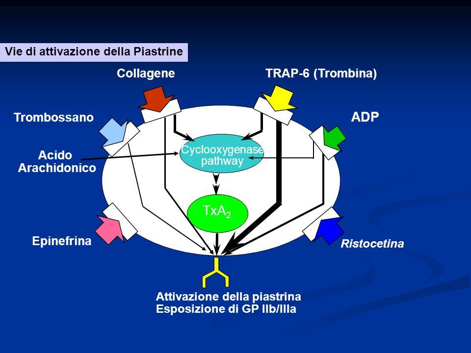 ADP TxA2 Collagene TRAP-6 (Trombina) Trombossano Acido Arachidonico