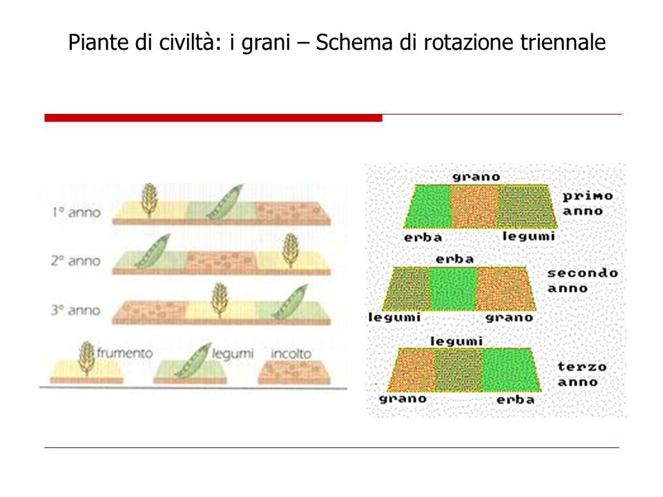 Piante di civiltà: i grani – Schema di rotazione triennale