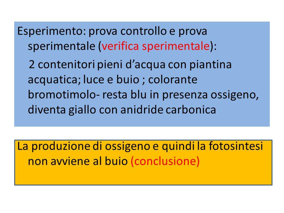 Esperimento: prova controllo e prova sperimentale (verifica sperimentale):