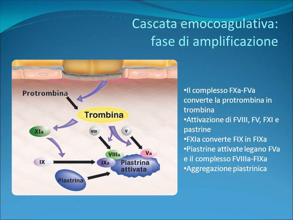 Cascata emocoagulativa: fase di amplificazione