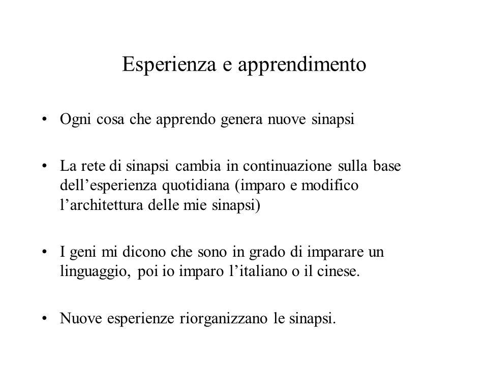 Esperienza e apprendimento