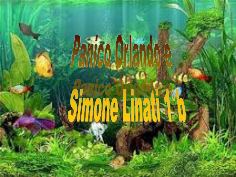 Panico Orlando e Simone Linati 1°b