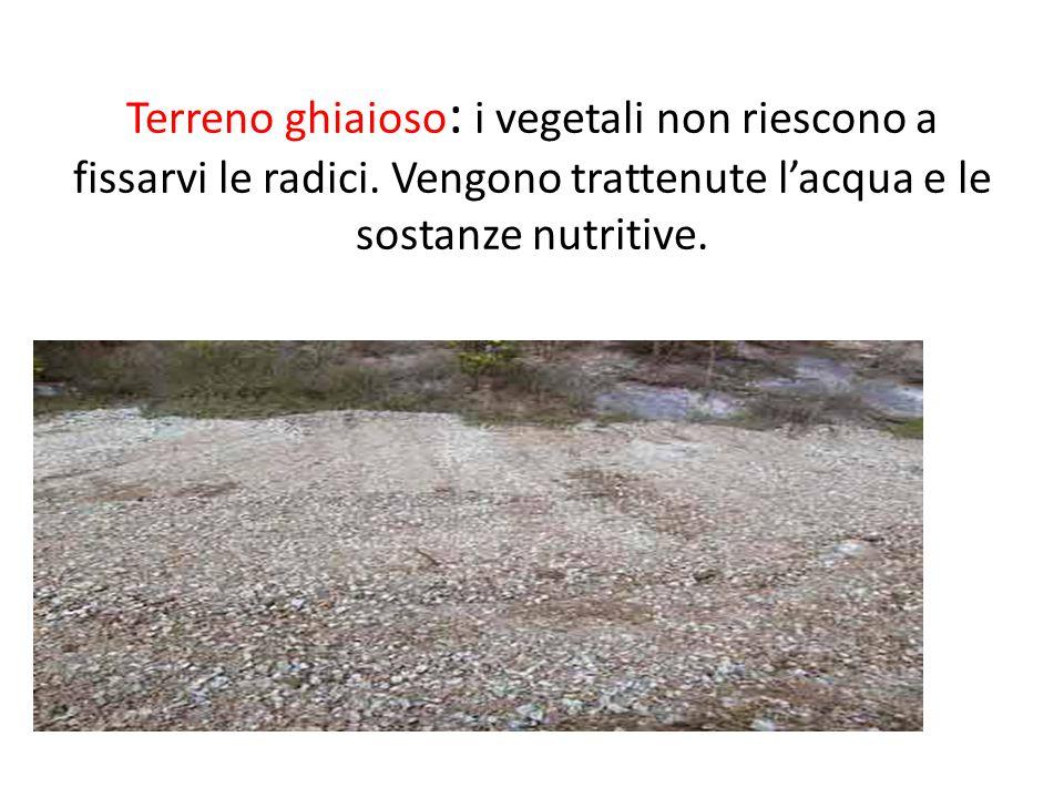 Terreno ghiaioso: i vegetali non riescono a fissarvi le radici