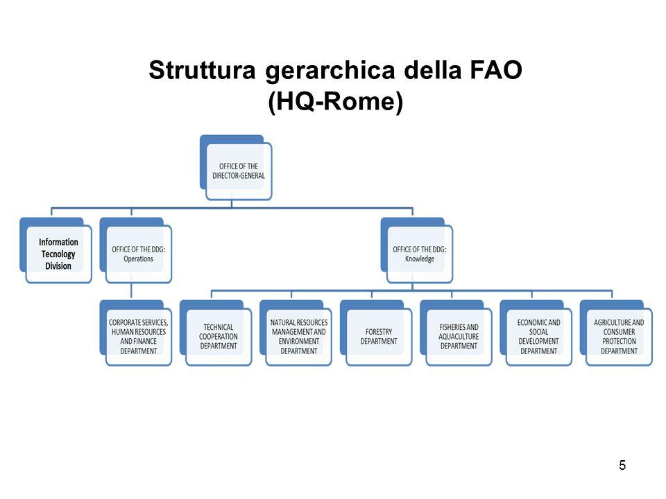 Struttura gerarchica della FAO (HQ-Rome)