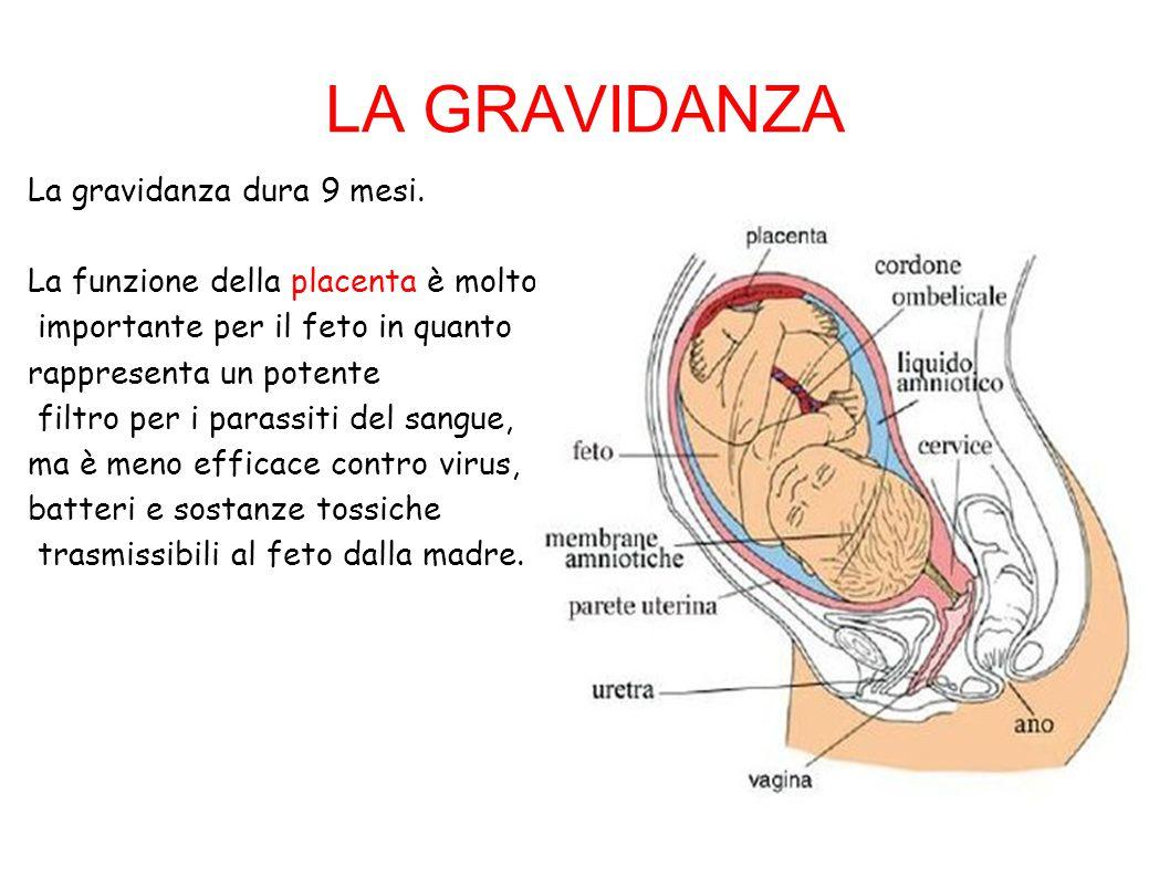 LA GRAVIDANZA La gravidanza dura 9 mesi.