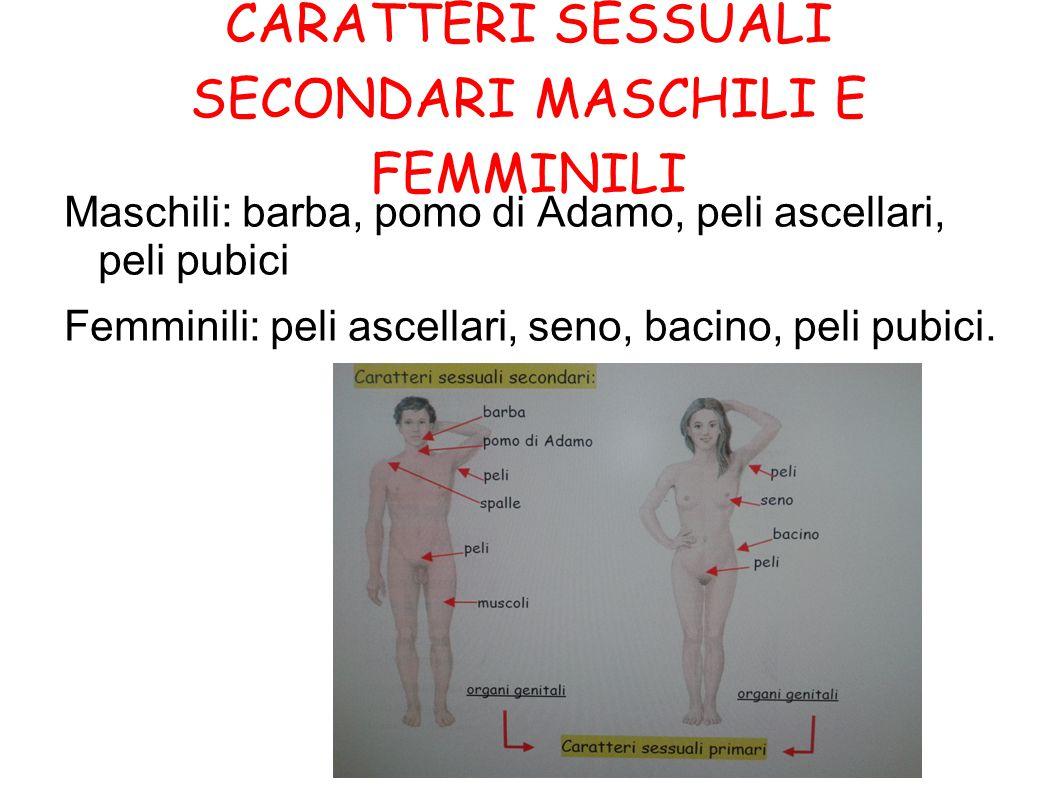 CARATTERI SESSUALI SECONDARI MASCHILI E FEMMINILI