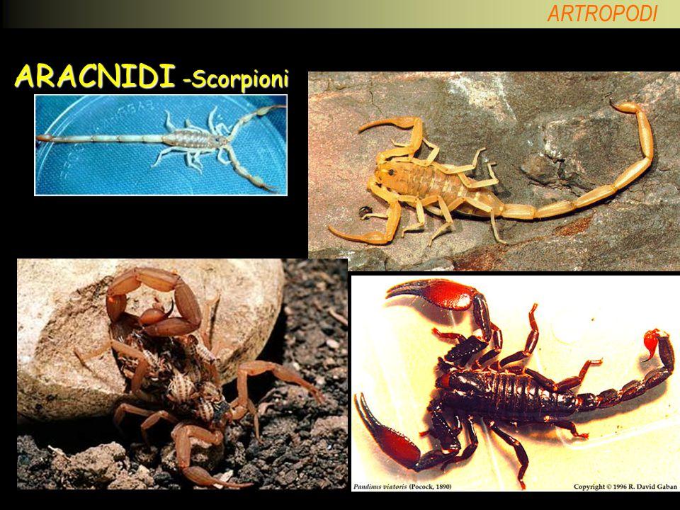 ARACNIDI -Scorpioni Altri Scorpioni esotici.