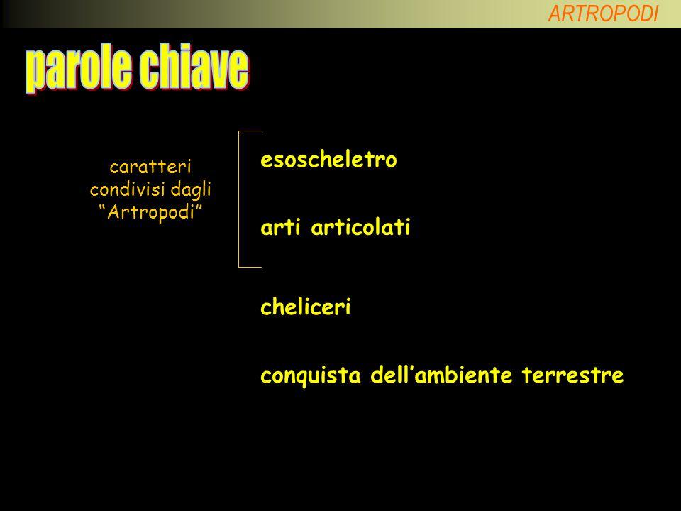 caratteri condivisi dagli Artropodi