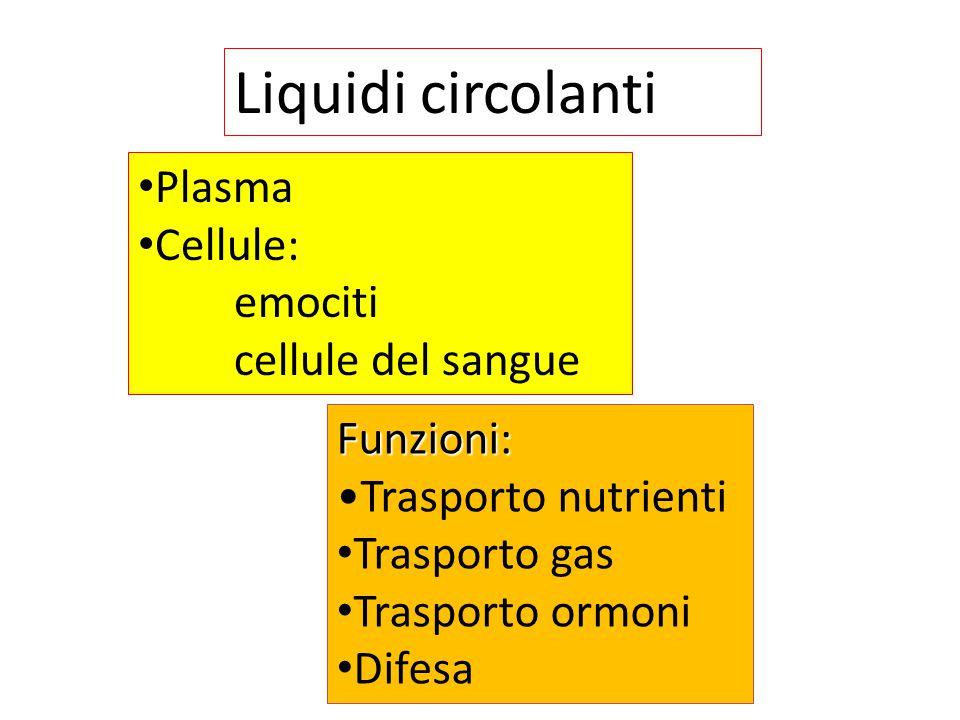 Liquidi circolanti Plasma Cellule: emociti cellule del sangue