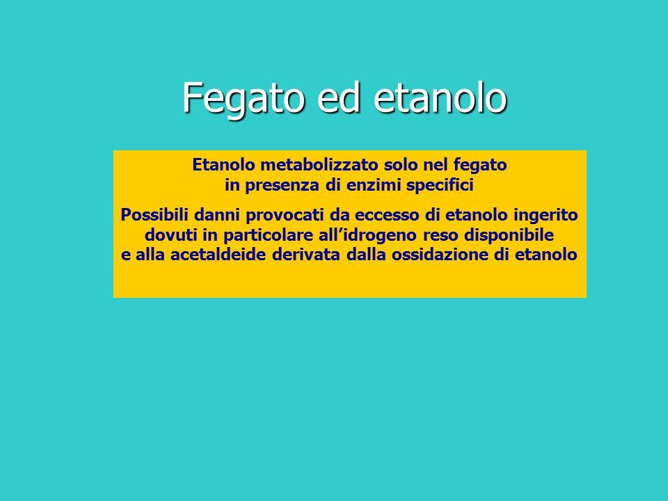 Etanolo metabolizzato solo nel fegato in presenza di enzimi specifici