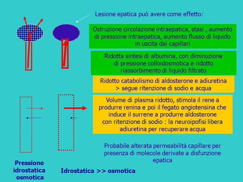 Pressione idrostatica osmotica