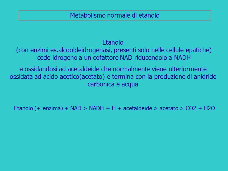 Metabolismo normale di etanolo