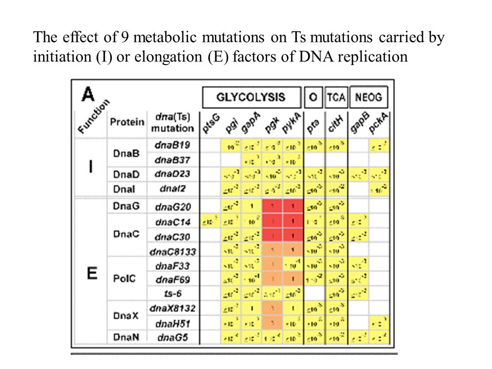 The effect of 9 metabolic mutations on Ts mutations carried by initiation (I) or elongation (E) factors of DNA replication