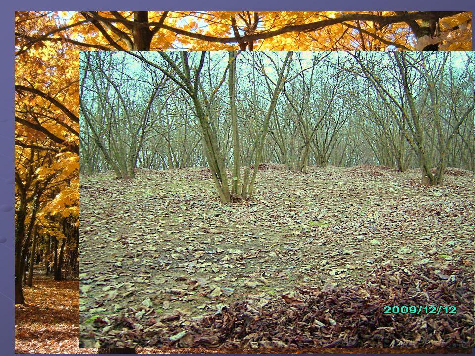 Esempio Vado in un parco in autunno e vedo le foglie ammucchiate di preferenza da una parte. Perché si trovano in questa posizione