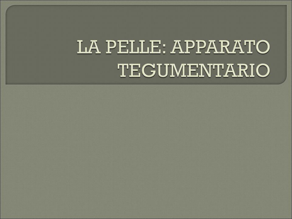 LA PELLE: APPARATO TEGUMENTARIO
