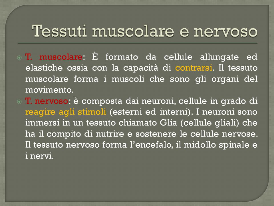 Tessuti muscolare e nervoso