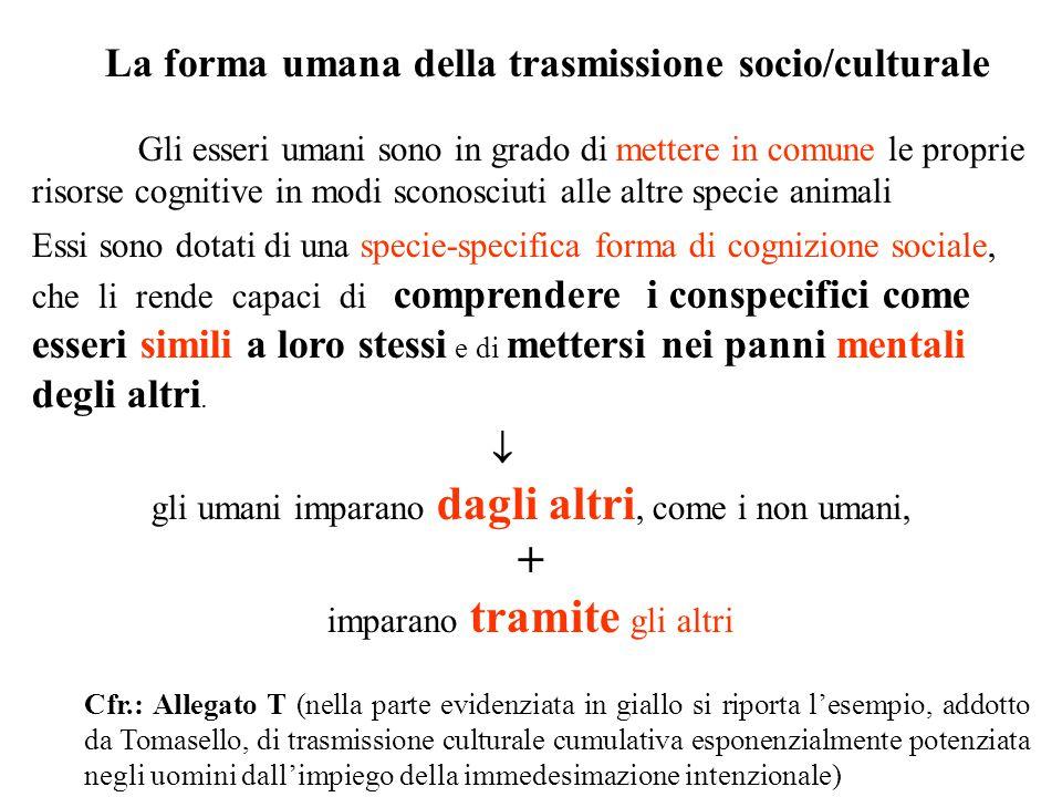La forma umana della trasmissione socio/culturale