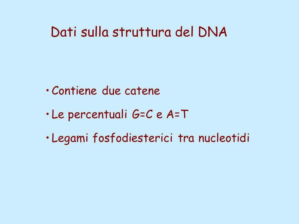 Dati sulla struttura del DNA