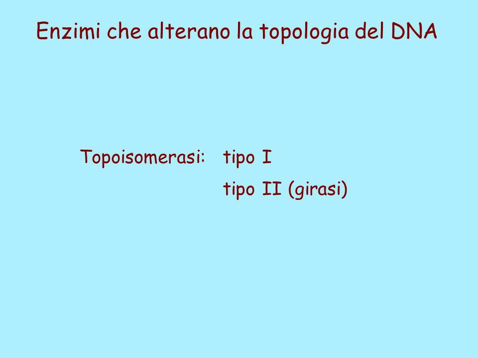 Enzimi che alterano la topologia del DNA