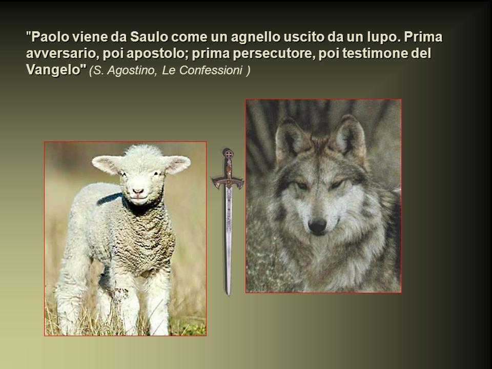 Paolo viene da Saulo come un agnello uscito da un lupo