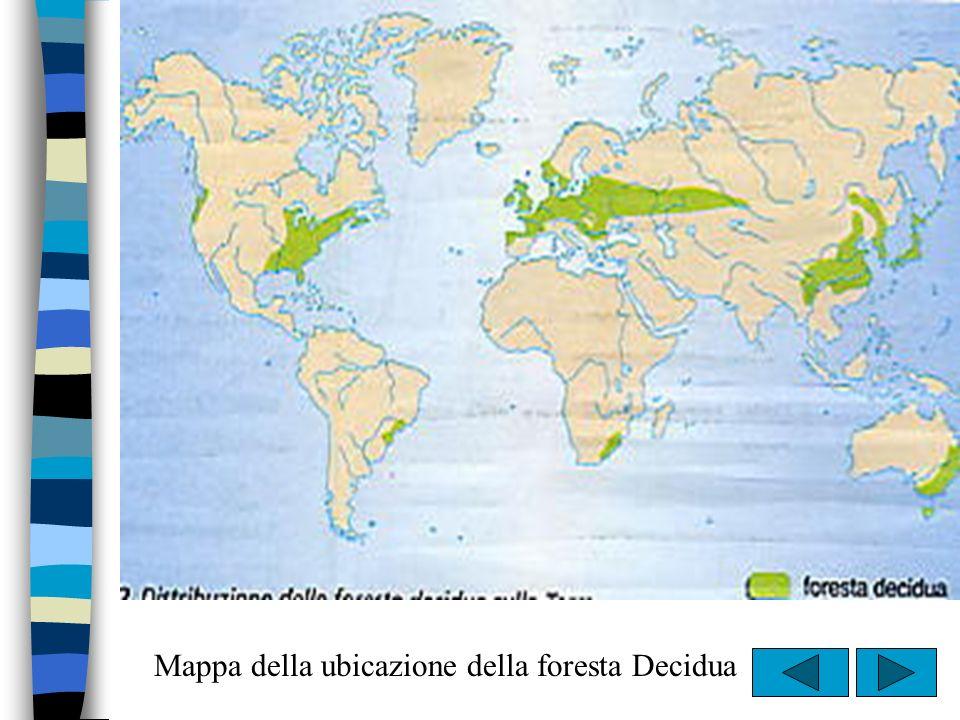 Mappa della ubicazione della foresta Decidua