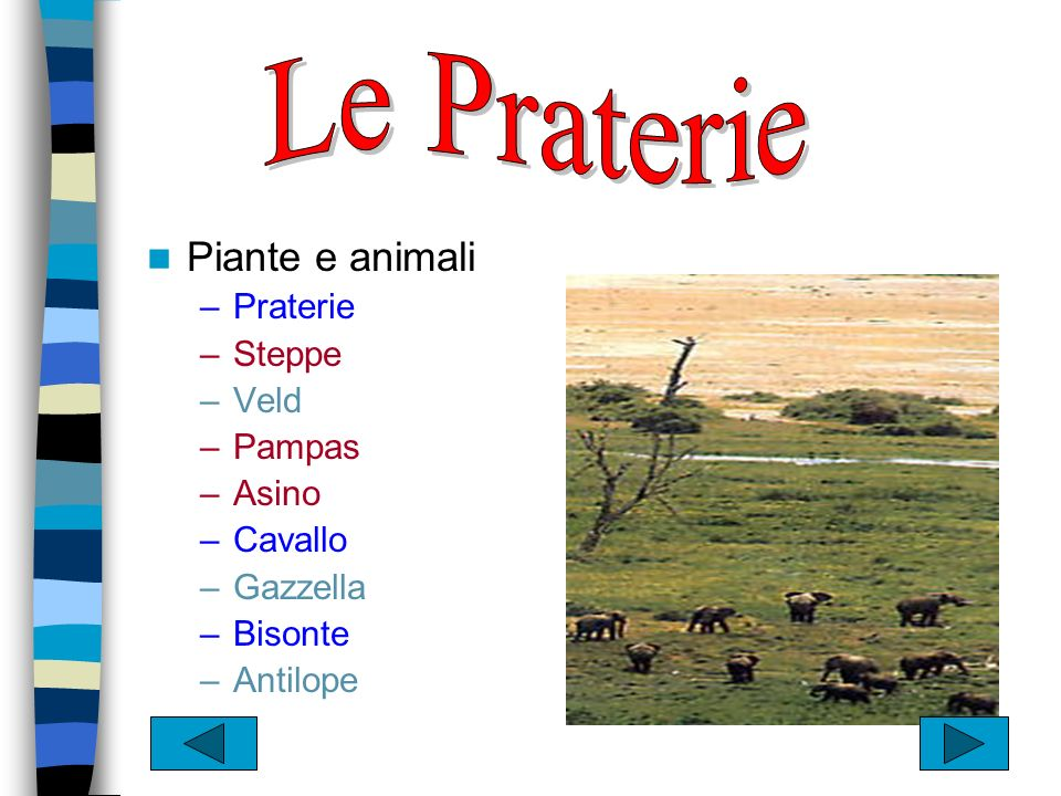 Le Praterie Piante e animali Praterie Steppe Veld Pampas Asino Cavallo