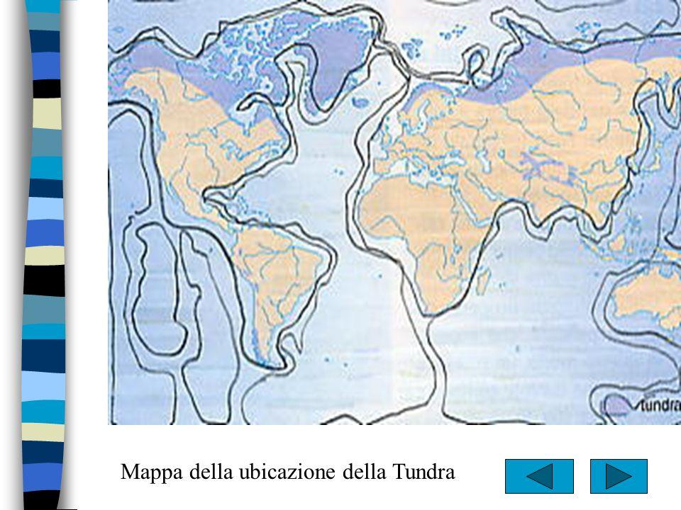 Mappa della ubicazione della Tundra