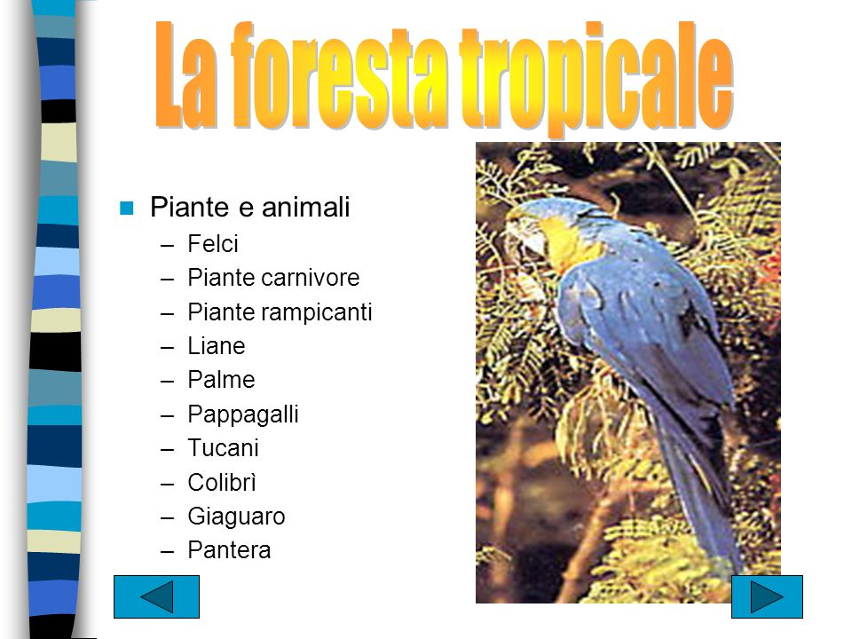 La foresta tropicale Piante e animali Felci Piante carnivore