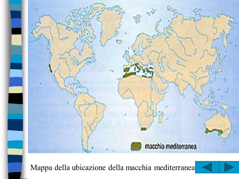 Mappa della ubicazione della macchia mediterranea