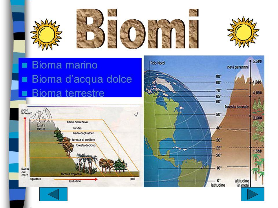 Biomi Bioma marino Bioma d'acqua dolce Bioma terrestre