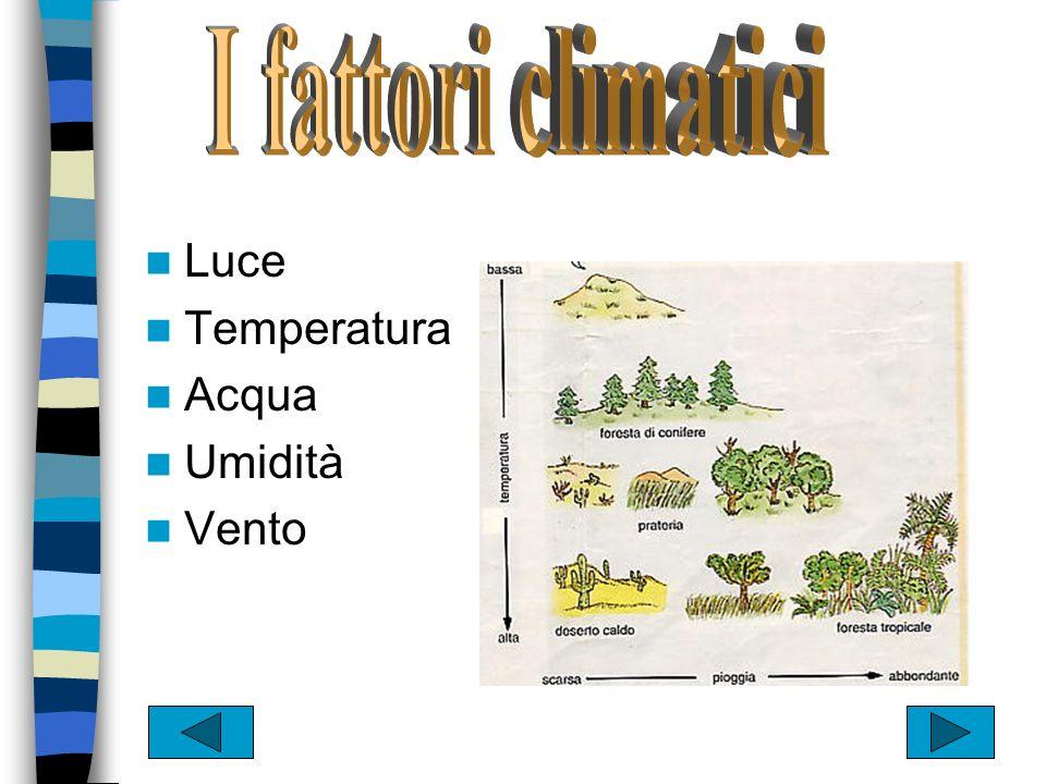 I fattori climatici Luce Temperatura Acqua Umidità Vento