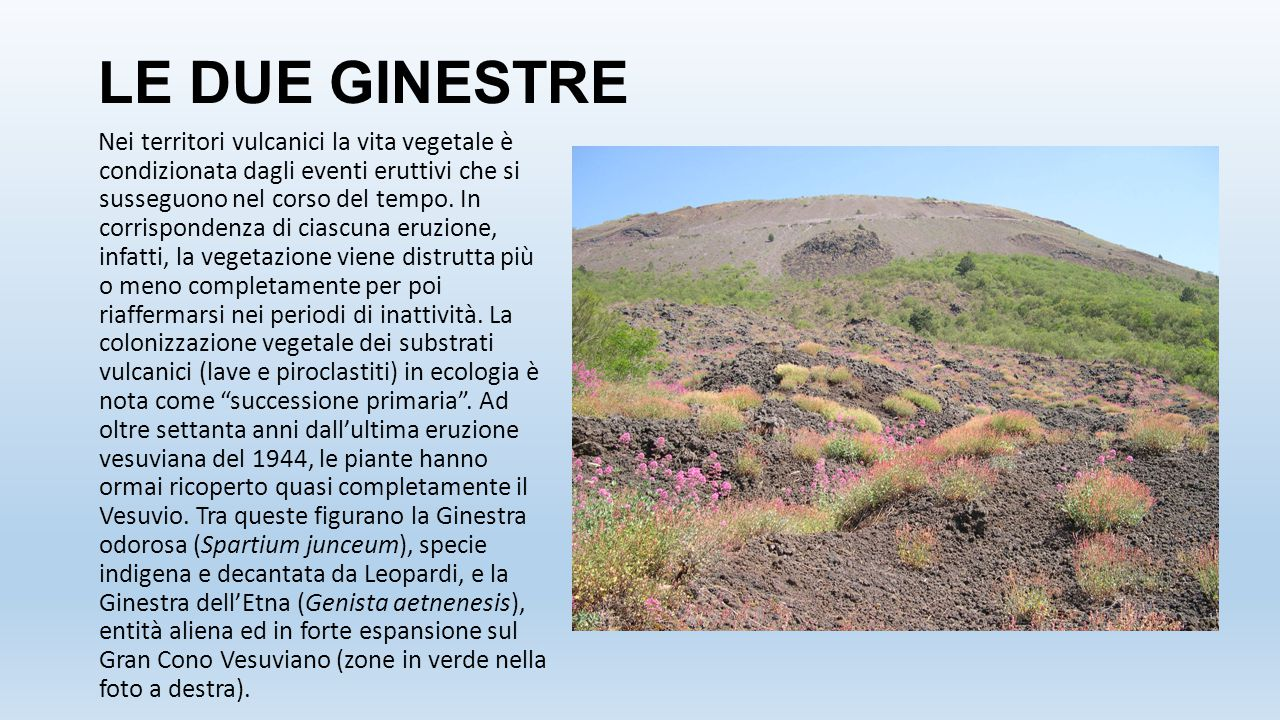 LE DUE GINESTRE