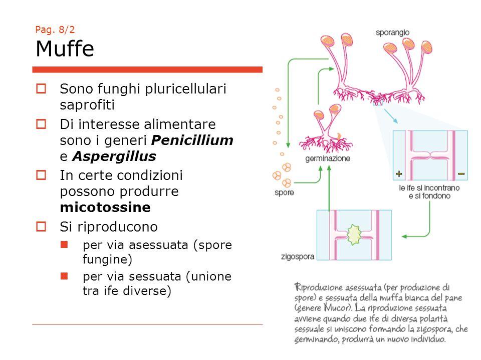 Sono funghi pluricellulari saprofiti