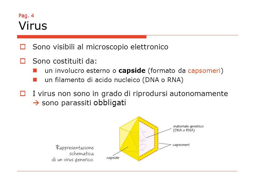 Sono visibili al microscopio elettronico Sono costituiti da: