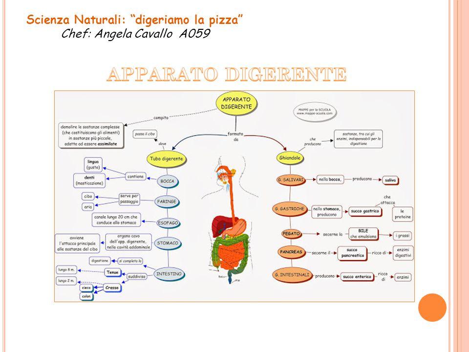 Scienza Naturali: digeriamo la pizza