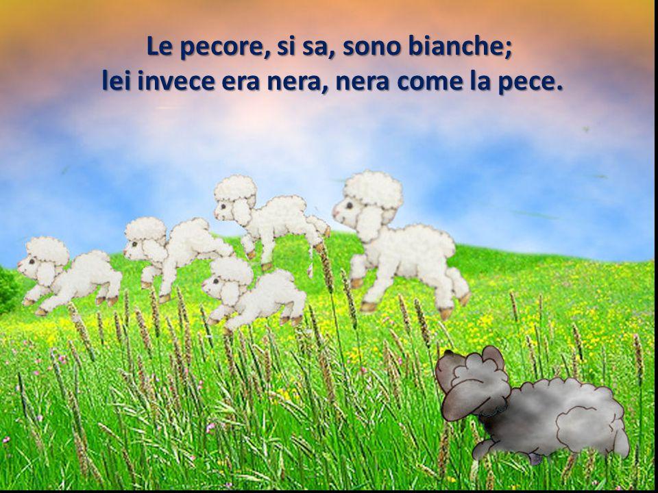 Le pecore, si sa, sono bianche;