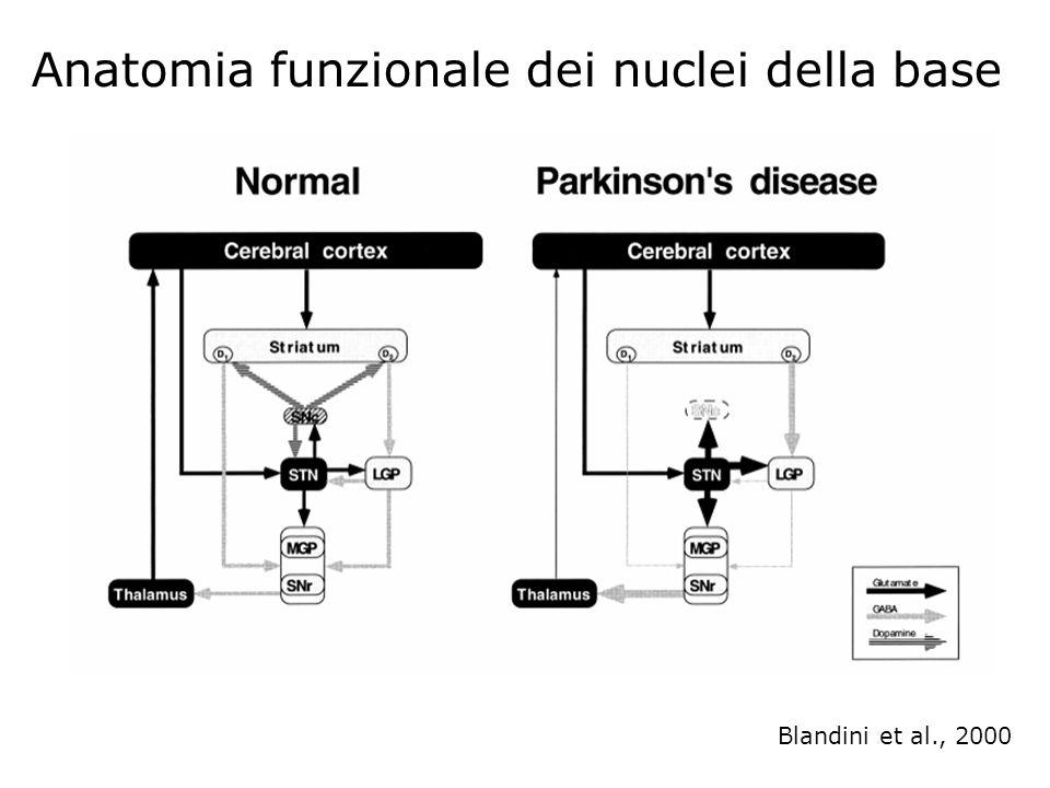 Anatomia funzionale dei nuclei della base