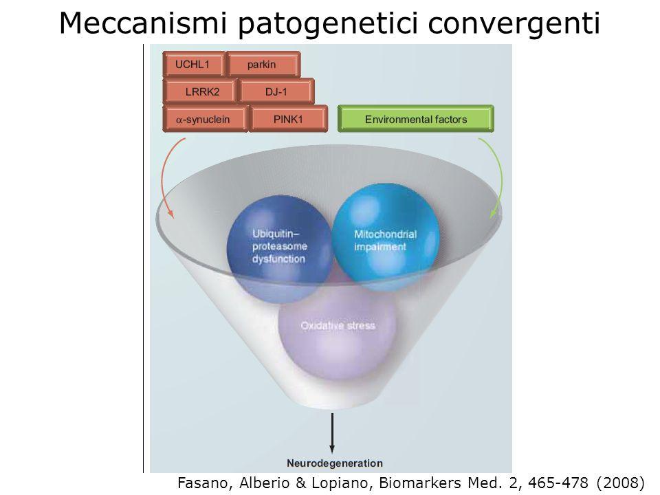 Meccanismi patogenetici convergenti