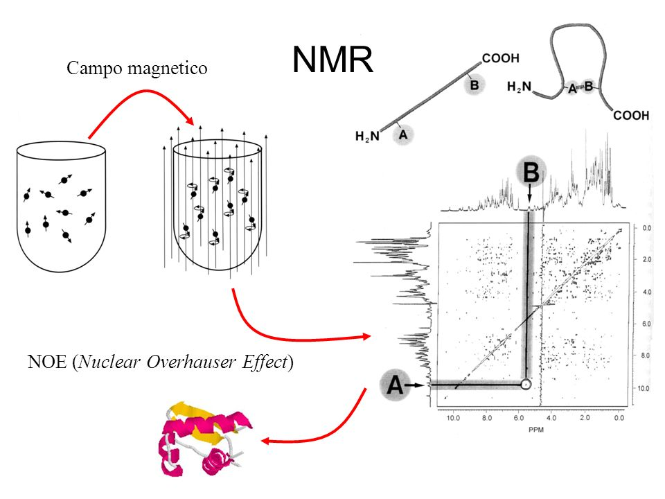 NOE (Nuclear Overhauser Effect)