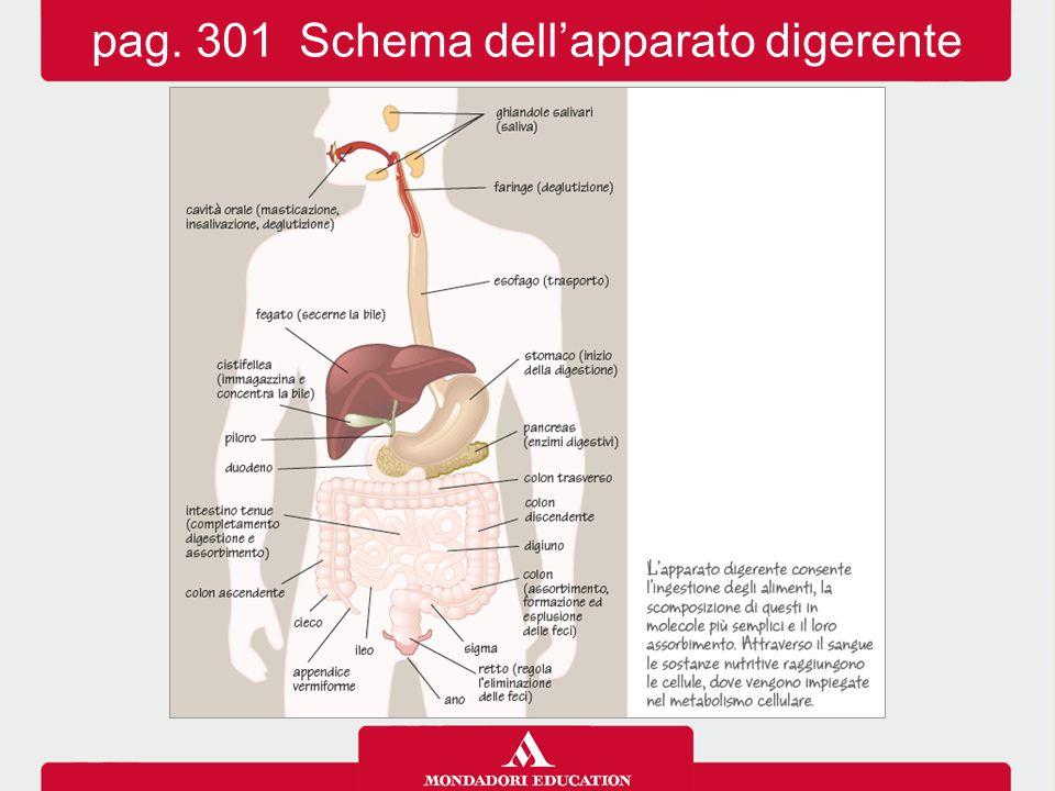 pag. 301 Schema dell'apparato digerente