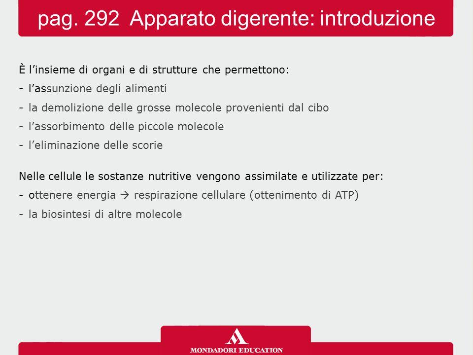 pag. 292 Apparato digerente: introduzione