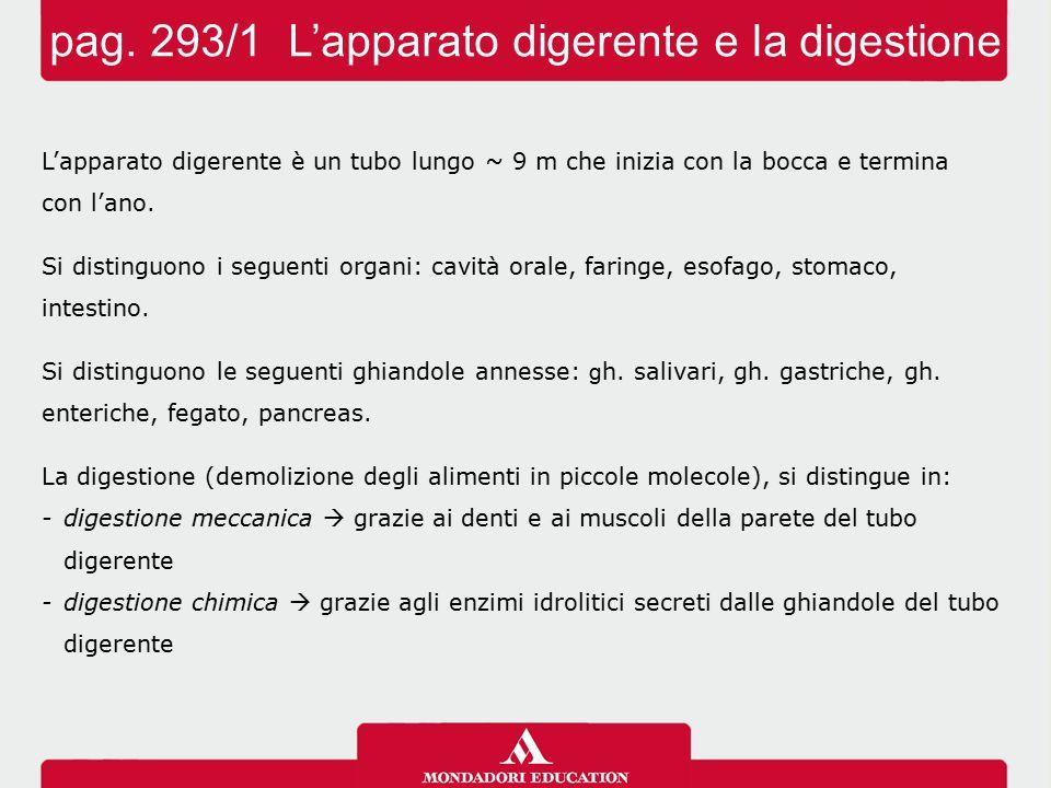 pag. 293/1 L'apparato digerente e la digestione