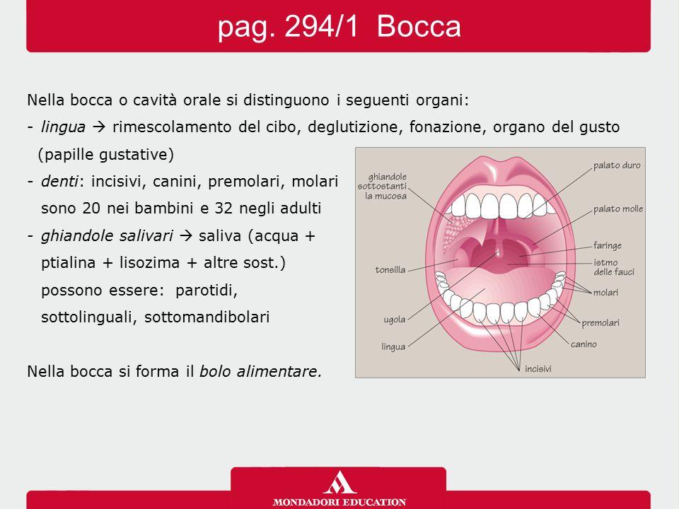 pag. 294/1 Bocca Nella bocca o cavità orale si distinguono i seguenti organi:
